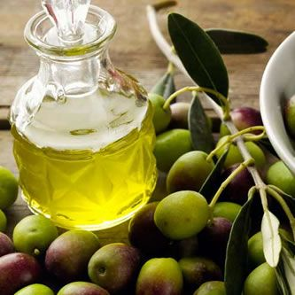 Special offer for discover the olive oil in Tuscany and holive harvest in Versilia